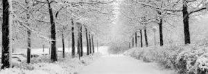 Klachtenvrij de winter door in 't Wheemhuus